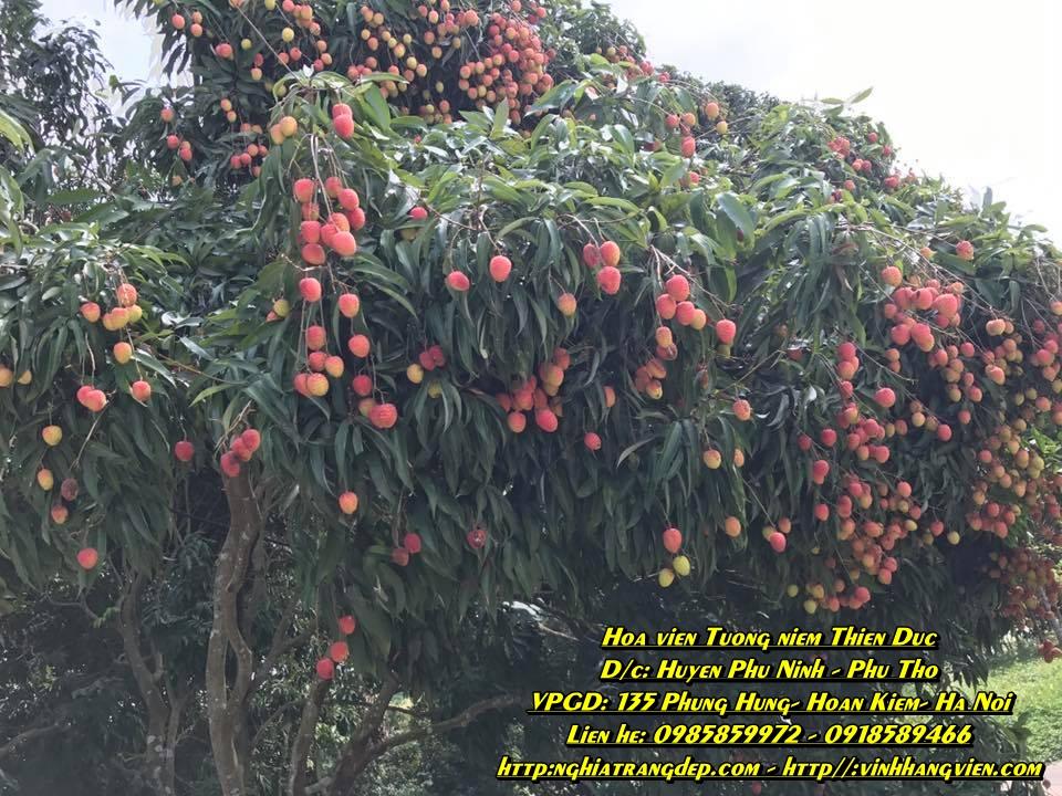 Khu vườn trái cây - công viên Thiên Đức